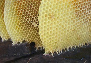Honeycomb beeswax