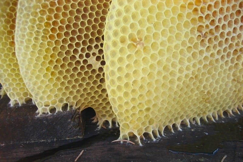 Honeycomb beeswax