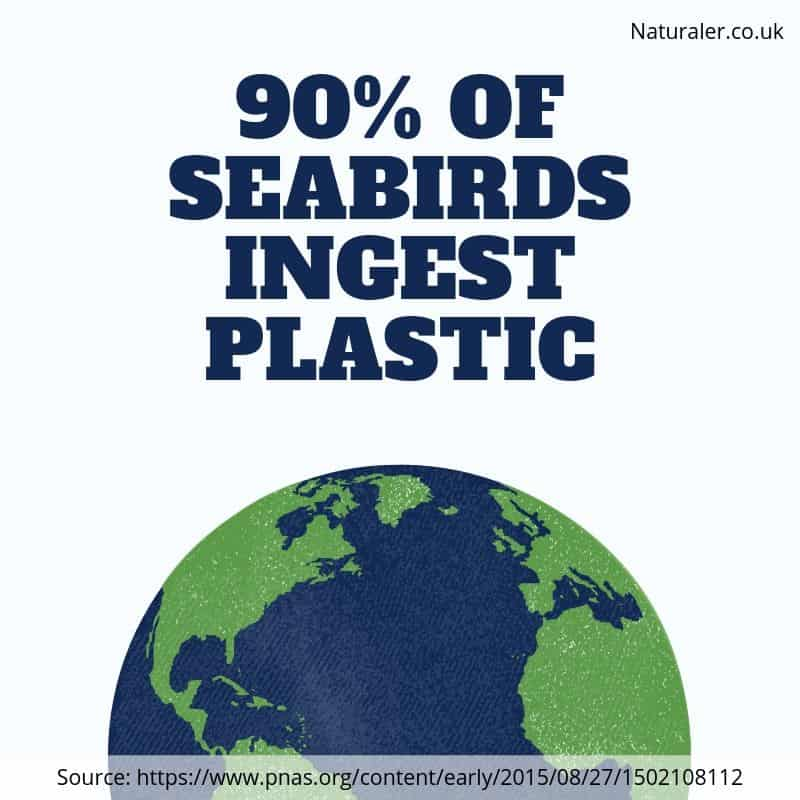 90 of seabirds ingest plastic